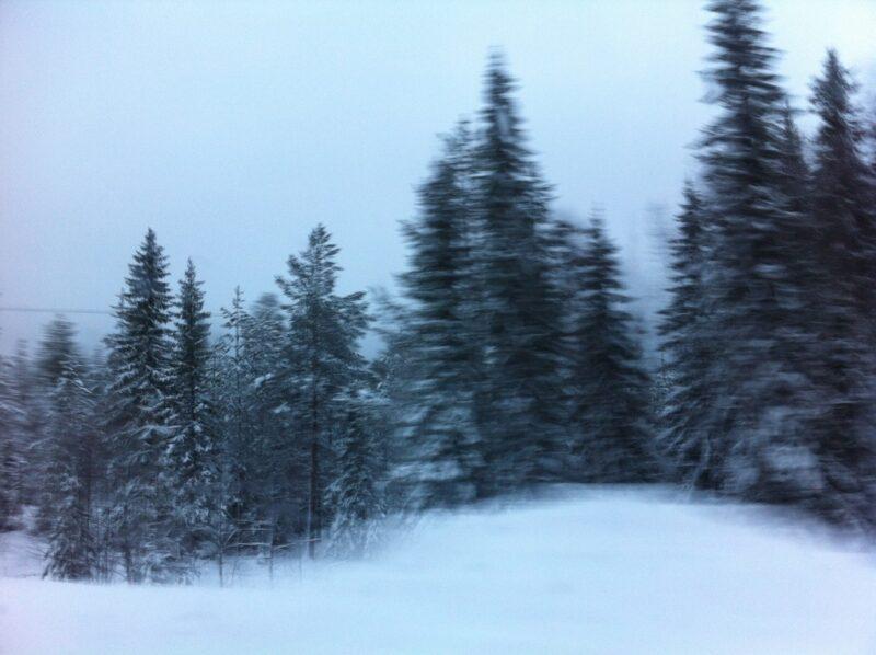 Wald Bäume Viitostie - Landstrasse Nr.5