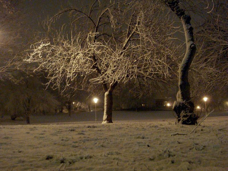 Berlin: Winter-Nacht im Weinbergspark