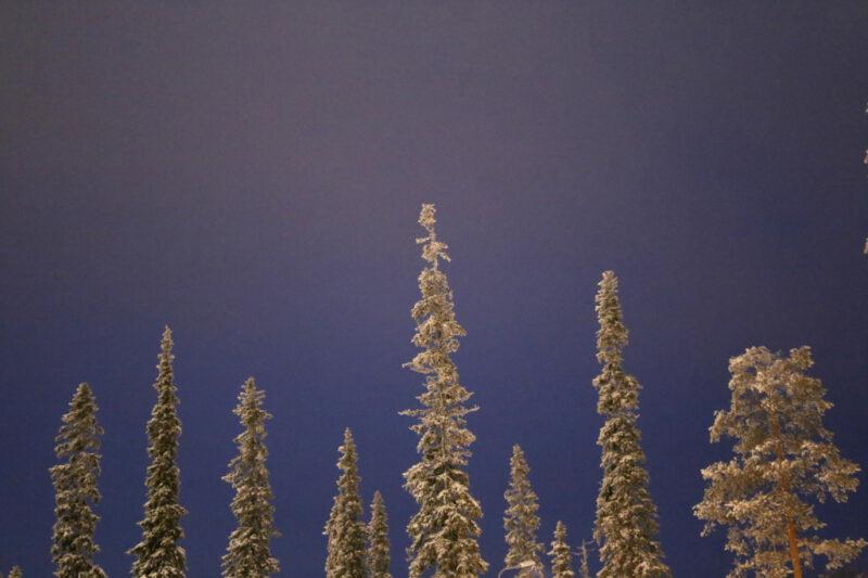 Schneebedeckte Tannenbaumspitzen