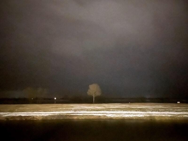 Winter: Baum auf den Elbwiesen bei Hitzacker