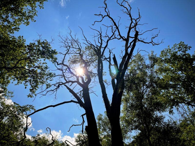 Toter Baum im Sonnenschein